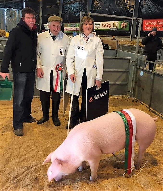 Royal Welsh Winter Fair Pig Champion