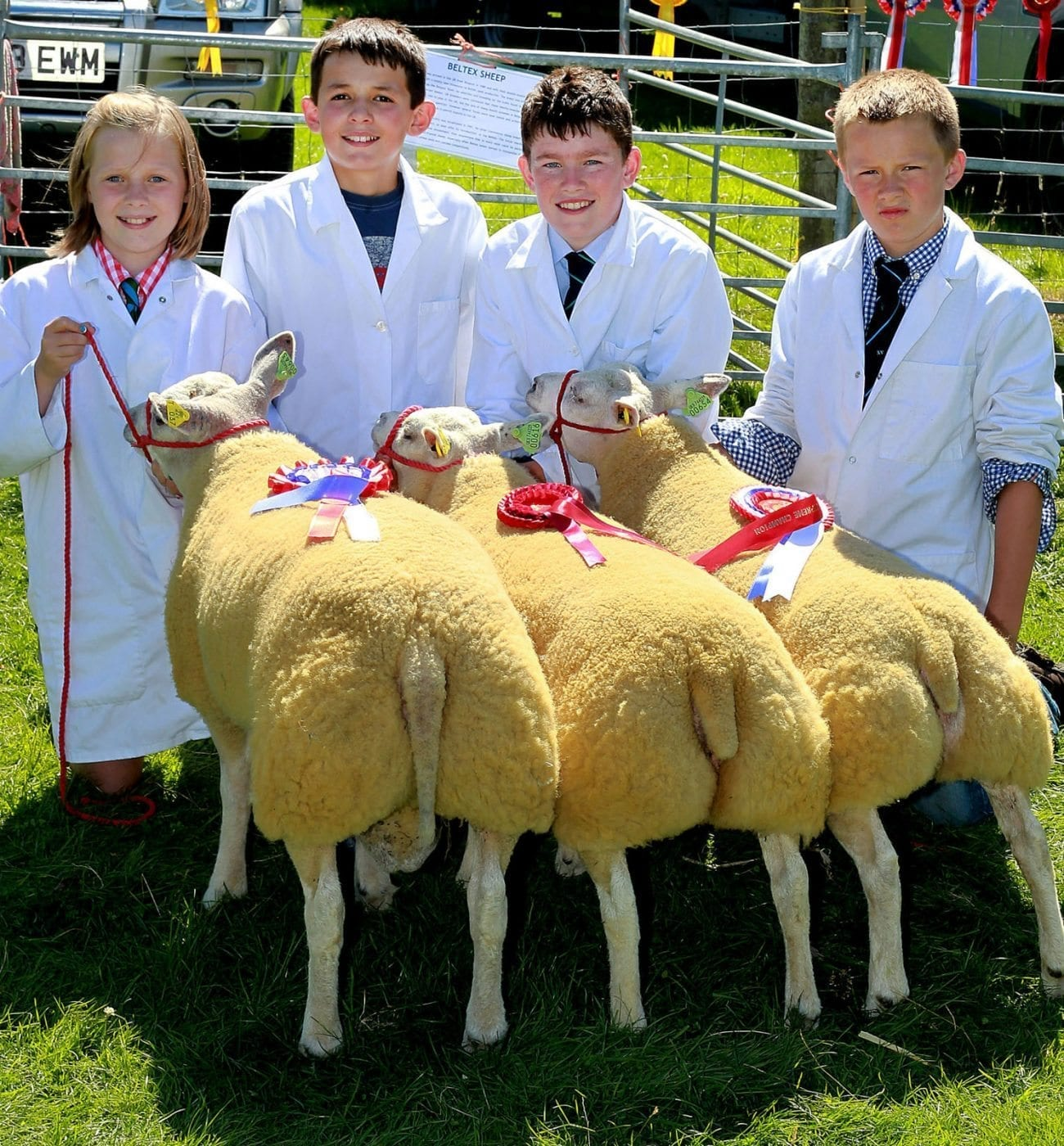 Interbreed Group of Three at Llanilar Show