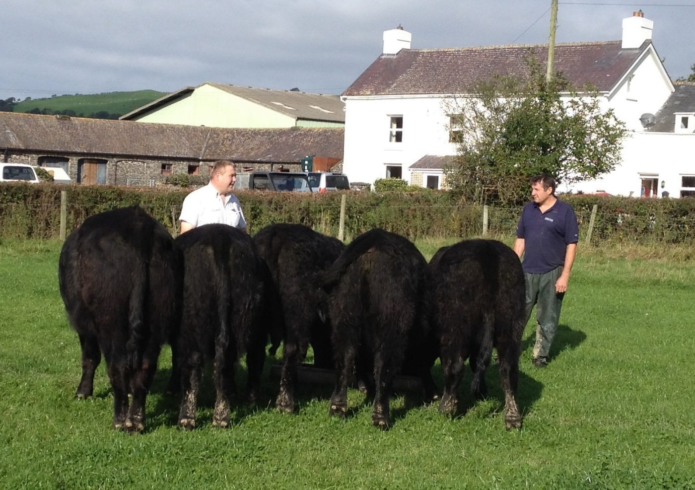 Welsh Black Beef this week
