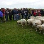 Welsh Beltex Club Flock Visit