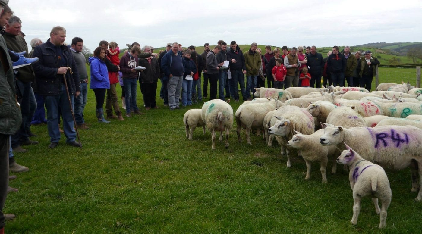 Welsh Beltex Club Flock Visit