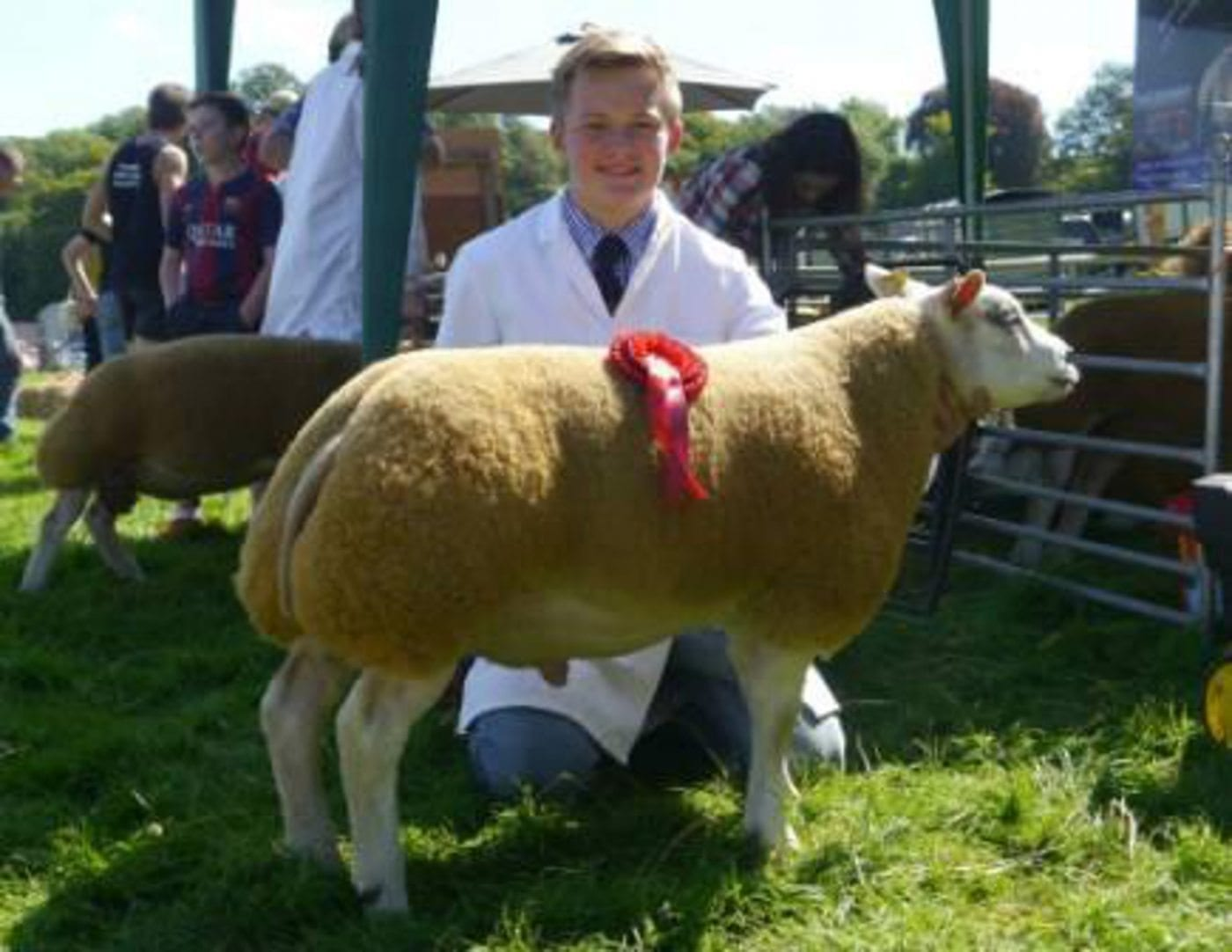Beltex Ram Lambs for sale