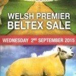 welsh beltex sale 001