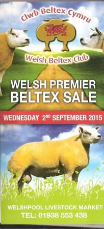 Beltex for sale at Welshpool