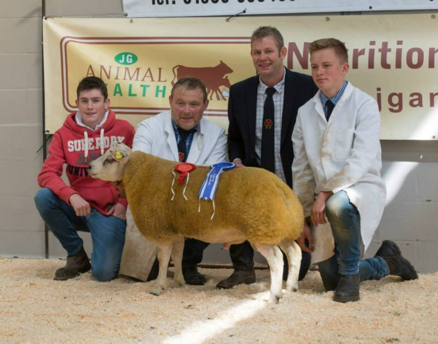 Reserve Male Champion at Welsh beltex Sale
