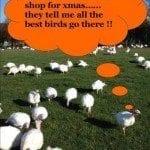 Best birds - Copy (2)
