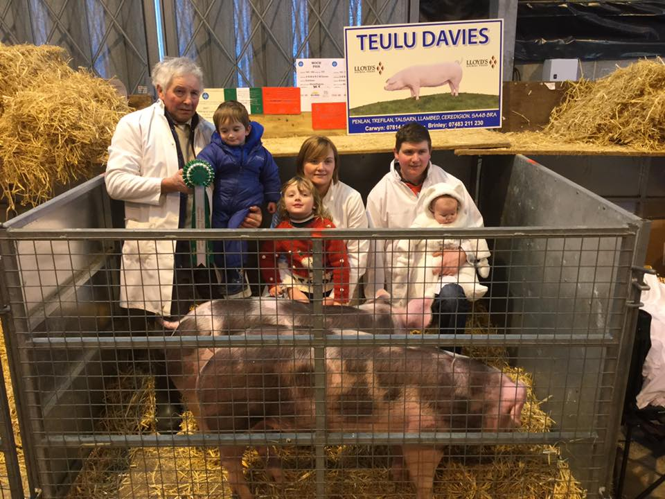 Reserve Champion Single Pig from the Winter Fair